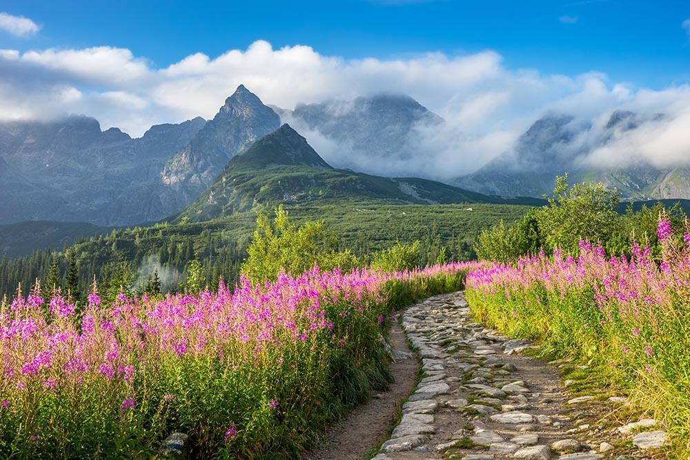 Hala Gąsienicowa, Tatry - sierpniowy krajobraz z widokiem na halę pełną kwiatów
