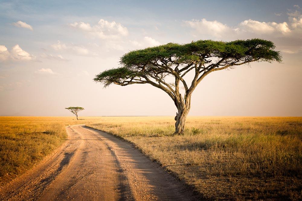 Afryka, obrazy i fototapety na ścianę