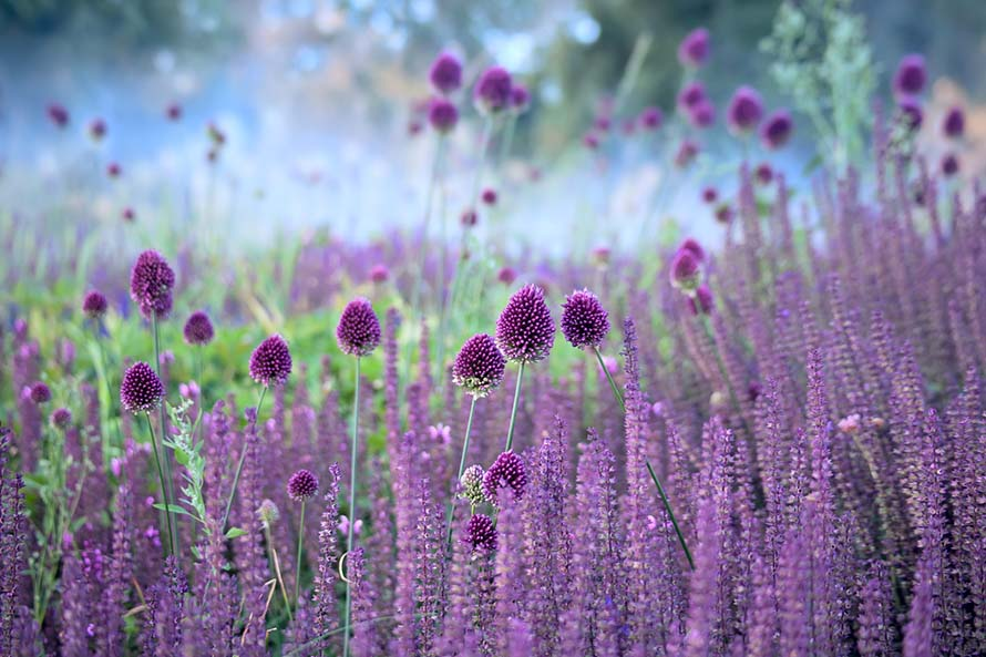 Obrazy do sypialni z kwiatami